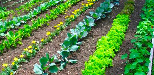 Growing Vegetables – Which Sort Will Fit You?